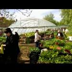 Jungpflanzen Hofverkauf 2015