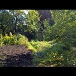 Im Garten 2013 - Blick auf Ine´s Hütte