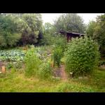 Der wunderschöne Garten - Juli 2014