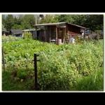 SelbstversorgerInnen-Garten