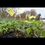 Jungpflanzen-Verkauf