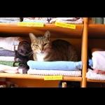 Katze? Handtuch?