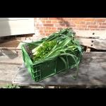 Frisches, leckeres Grün aus dem Garten